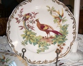 Set of Four Rutherford's Birds Dinner Plates