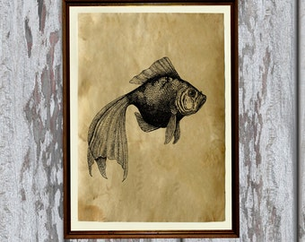 Fish art print Old paper Antiqued decoration vintage looking 8.3 x 11.7 inches AK137