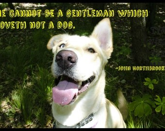 Photograph of a dog with a saying by John Northbrooke