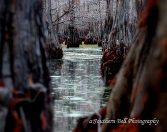 Cabin Photos Water Tree Bayou Photograph Print Water Photography 8x10 Trees Fall Trees Swamp Lake Pictures Red Tree Louisiana Bayous 12