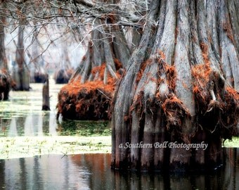 Lake House Decorations Wall Art Office Pictures Swamp and Bayou Shot. Trees and Moss on Water. 8x10 Louisiana Bayous. Cabin Photos 20  21