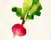 Radish - Watercolor - Poster