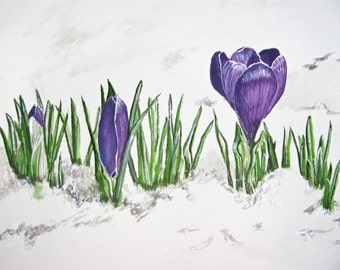 Crocus Flowers in the Snow Watercolor Print