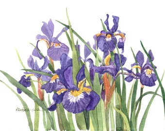 Wild Iris Original Watercolor Painting 11x15 by Wanda's Watercolors