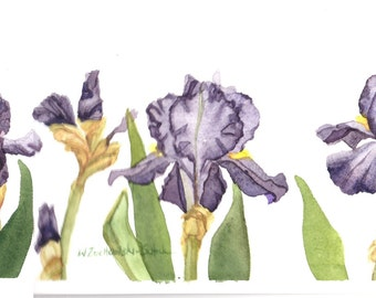 Iris Trio Original Watercolor Painting 7x15 by Wanda's Watercolors