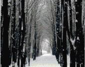 Winter Trees Landscape Counted Cross Stitch Pattern Chart PDF Download by Stitching Addiction