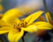 Yellow Floral Photograph, Macro Nature Photography