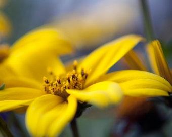Yellow Floral Photograph, Macro Nature Photography