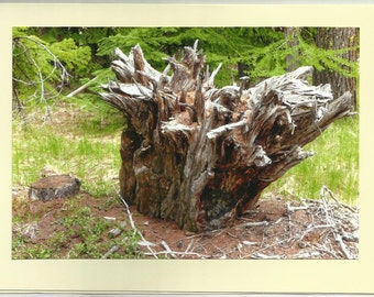 PILCHER CREEK, Nature's Many Faces - Original Outdoor Scenery / Local Artist Digital Photo - Blank Photo Card Twin Fold Design - In Stock