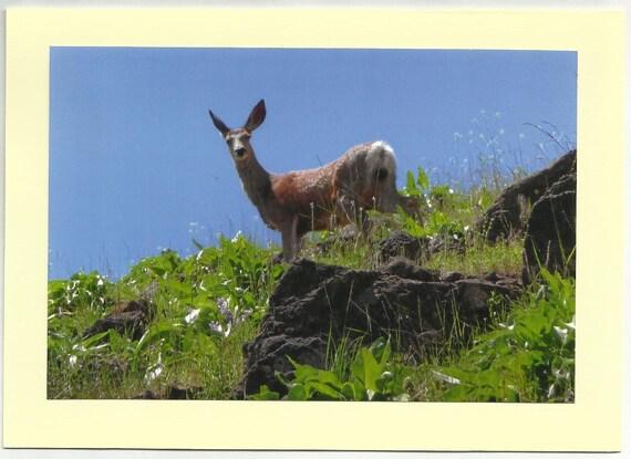 Items similar to doe mule deer original outdoor scenery for Deer scenery