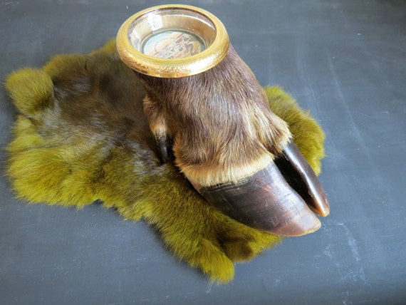 Vintage Taxidermy Moose Hoof Ashtray Curiosity