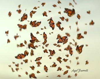 Large Wall Decor, Monarch Butterflies Art, Ethereal Art, Happy Art, Butterfly Wall Art, Ethereal Wedding Gift, Teal, Orange, Nature Print