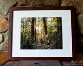"""CLEARANCE  Sun Shining Light Through the Evergreens 16x20"""" FRAMED & Matted PRINT Blue Ridge Mountains, Rhododendrons, Hiking"""