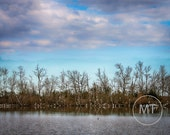 Fine Art Photo Bayou Savage Bird Sanctuary Egrets, Birds, Marsh Area, Southern Louisiana