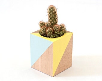 Woody planter - yellow & blue - for cacti and Succulents