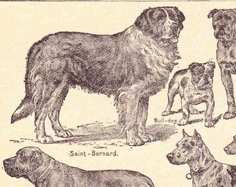 Antique French Print Dictionary Page 1920s Illustrations Working Dogs St Bernard Newfoundland paper projects scrapbooking, collageBook page