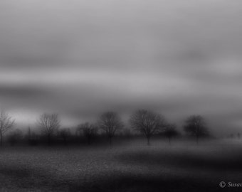 Foggy Trees, Minimalisum, Autum, Fall,  Winter. foggy, germany, clouds