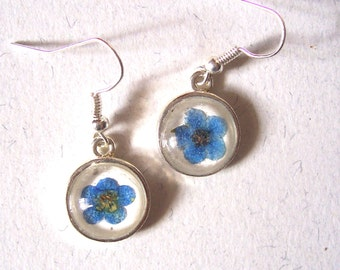 Real Forget-me-not Small Round Pressed Flower Silver Plated Earrings