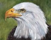 Bird Painting American Bald Eagle Bird Wildlife SFA Original hand painted bird acrylic painting by Australian Artist Janet M Graham