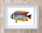 Fish art print  // colorful marine life print //  Cottage wall decor Antique print Nature wall art Home decor art