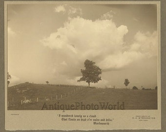Tree in the field antique photo by H. A. Strohmeyer