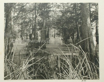 Swamps antique art photo by Nathan Weisman