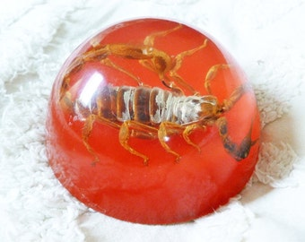 Vintage 1970s Resin Scorpion Paperweight. ///Free Shipping to the US!\\\