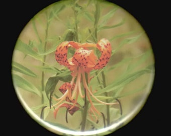 Tiger Lily Blossom - pinback button or magnet