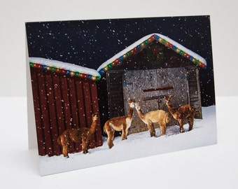 Alpacas Christmas / Holiday Photo Greeting Card