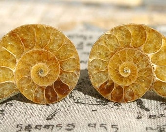 Cabinet Knobs - Light Colored Ammonite  Set of 2, Stone Cabinet Knobs, Kitchen Knobs and Pulls
