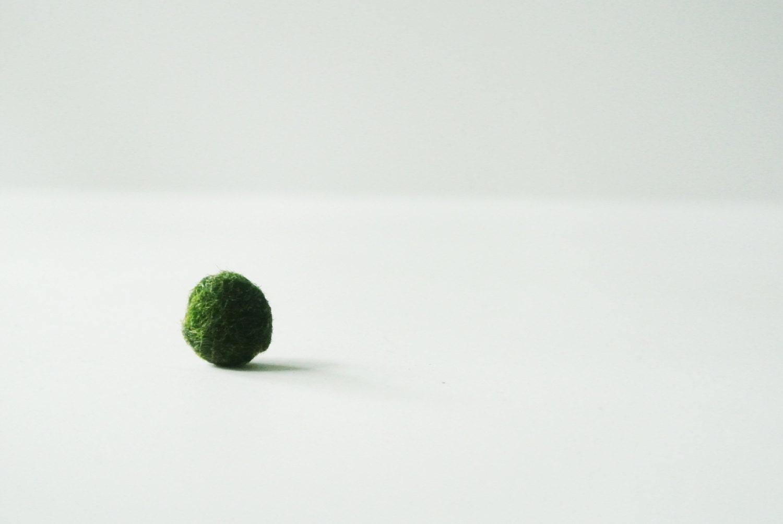 Moss Ball Ball Japanese Moss Ball