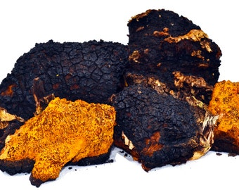 Chaga Mushroom Choose your weight and style naturally organic picked fresh to every order wild Chaga mushroom Chaga Mama Maine