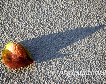 DIGITAL DOWNLOAD, Autumn Leaf on Concrete Print, Red, Green and Gray Photo, Fall Colours, Long Shadow