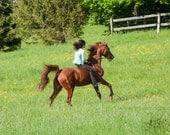 horse photography, best friends, equestrian art, horse crazy, horseback riding, equestrian art, cantering