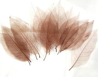 50 pc Beautiful Preserved Dried Skeleton Leaves Burgundy Autumn Wedding Cottage Shabby Decor Botanical Wholesale Craft Leaf