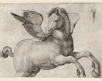 "Jacopo de' Barbari : ""Pegasus"" (1509-1516) - Giclee Fine Art Print"