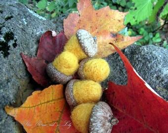Yellow Needle Felted Acorns, Set of 5