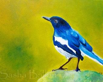 Western Blue Scrub Jay original oil painting