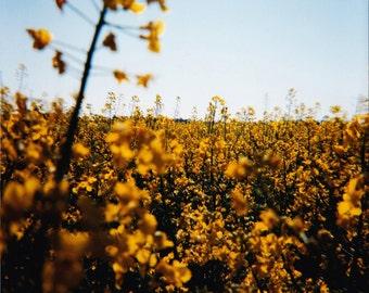 Field // Fine Art Photography // Print