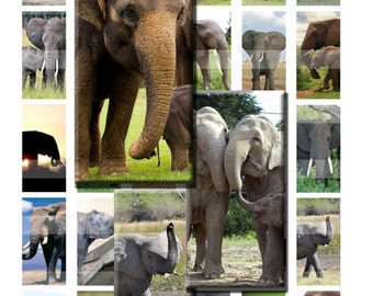 Elephant Pacyderm Baby Digital Images Collage Sheet 1x2 inch Rectangles Domino Commercial INSTANT Download RD21