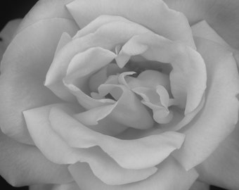 Flower Photo Art, Rose Photo Art, Black white Floral Print, Abstract Macro Flower Photo, Abstract close up view of Rose, O'Keefe inspired
