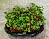 Radish Mania Hydroponic Microgreen Grow Your Own Kit, grow 3 crops of organic Non GMO Radish, USDA organic certified compostable grow mats