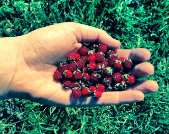 Small raspberries, blueberries and wild strawberries handmade lampwork beads / Berries/ Beading/