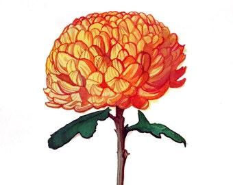 Original watercolour Chrysanthemum