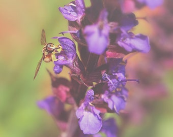 Hover Fly Color Photo Print { yellow, black, purple, green, insect, bee, flower, wings, wall art, macro, nature & fine art photography }
