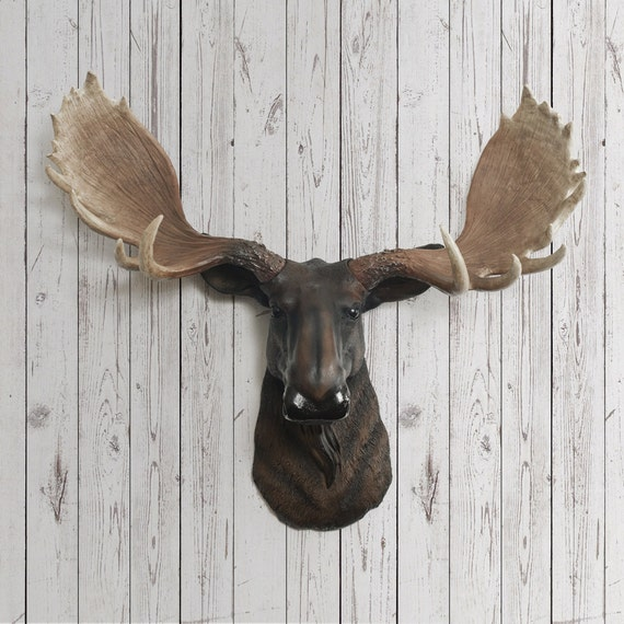 Moose head faux taxidermy the alberta resin by wallcharmers - Fake moose head mount ...