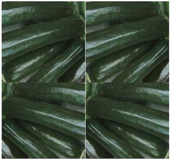 10 Pansy Black Beauty: 10 X ORGANIC ZUCCHINI BLACK Beauty Zucchini Squash Seed A