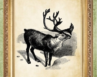 Reindeer Print Deer Art Print Wall Decor
