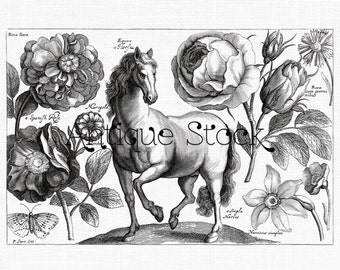 Vintage Horse and Flowers Digital Download - 17th Century Zoological Illustration - Printable Image for Transfers, Scrapbook, Wall Art...