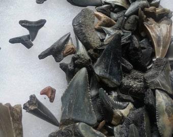 Loose Sharks Teeth